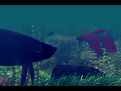 Betta Fish Animation