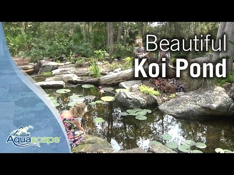 Beautiful Koi Pond