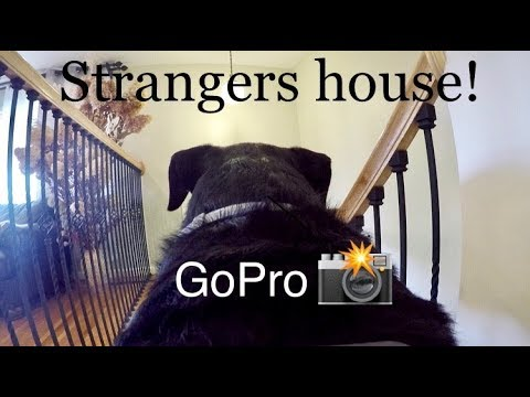 Rottweiler left alone at Home AGAIN! Go PRO |53