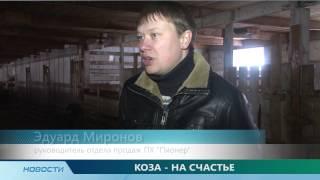 Романовские овцы(Романовские овцы ООО