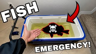 fish-emergency-dying-fish-pet-comes-back-to-life
