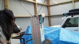 Farm dog Keri growling at her own reflection - Kakanui NZ