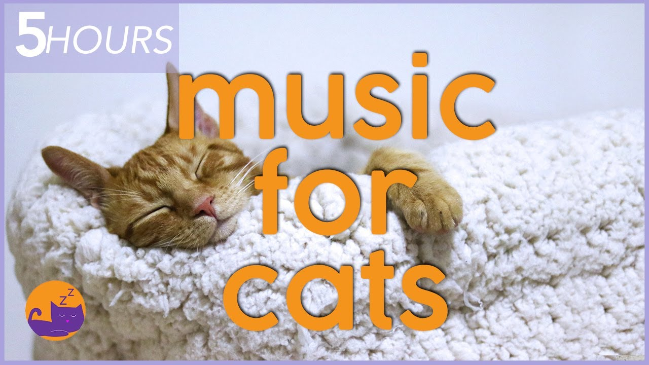 5 HOURS of Relaxing Music for Cats - Help Your Cat Relax and Sleep!