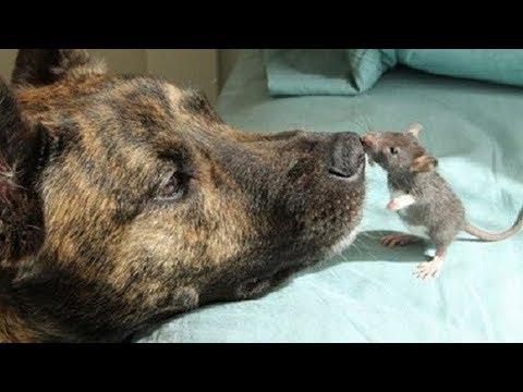 صداقات غير عادية بين الحيوانات لن تصدق انها حدثت بالفعل !!