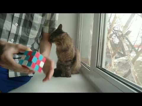 Фокус со смешной кошкой