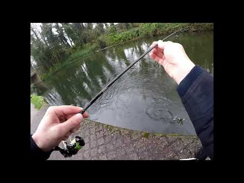 Perch And Pike At Grand Union Canal UK