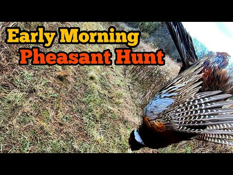 Early Morning Pheasant Hunt
