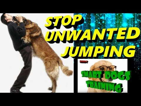 How To STOP Your Dog From Unnecessary Jumping | Dog training in hindi |