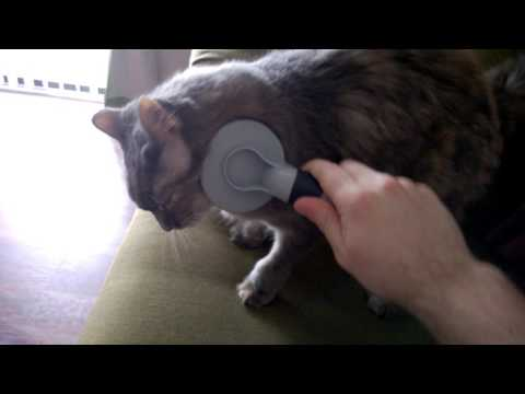 Cute Maine Coon Cat Loves Getting Brushed - Olive the Cat