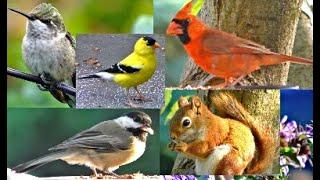 Видео : Птицы для кошек 2 часа