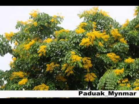ดอกไม้ประจำชาติ อาเซียน