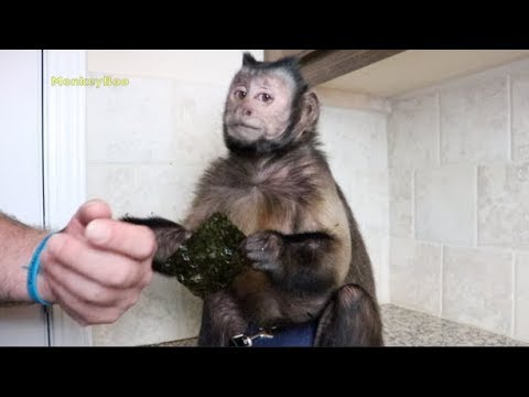 Monkey Tries Seaweed For The First Time! (SNACK PARTY)
