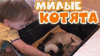 🐱 Маленькие Пушистые КОТЯТА. Кошка и Котята. НАША КОШКА родила.  Самое Милое Видео. БУСЫ ДЛЯ МАМЫ