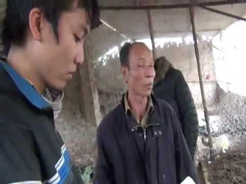 Cách nuôi giun quế -Bác Khoái Đông Anh Hà Nội
