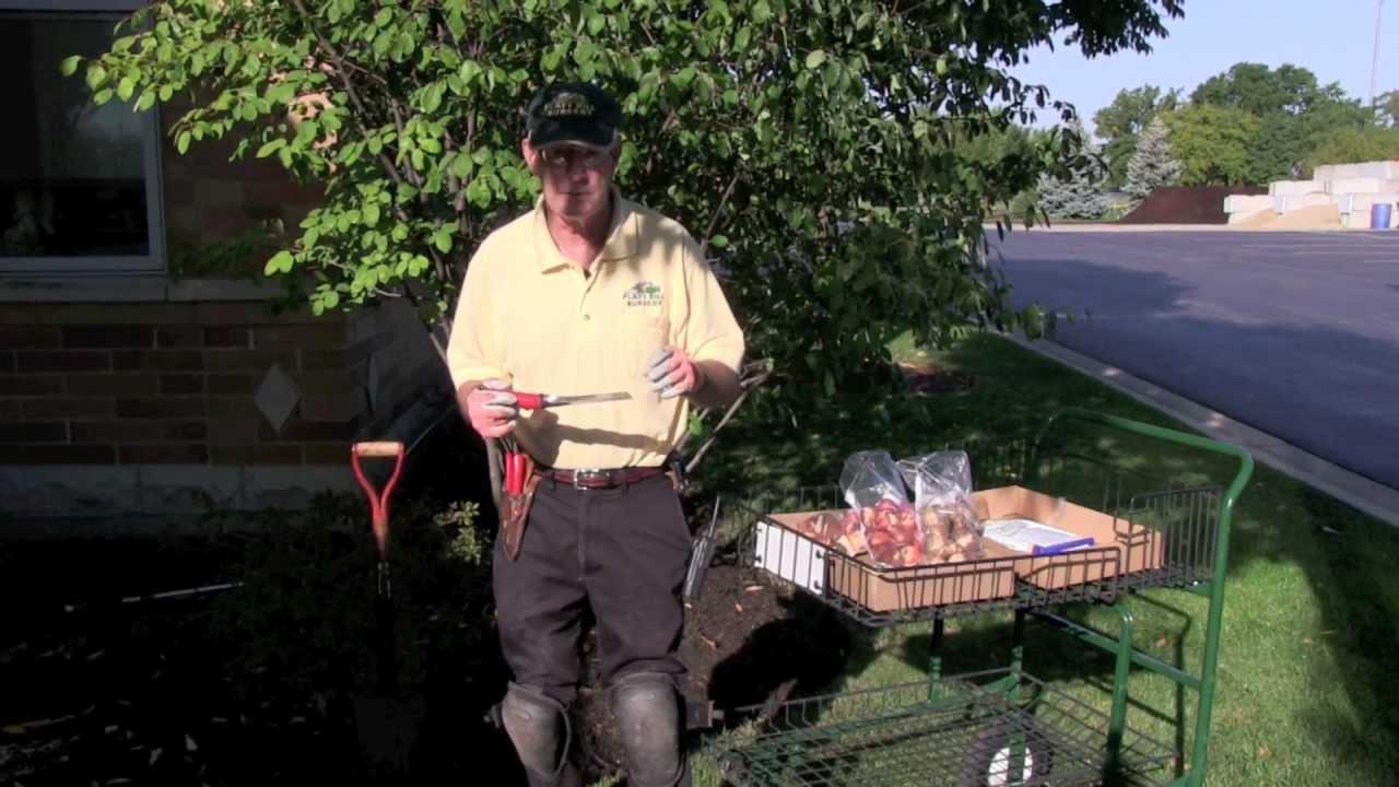 Bulb Planting Platt Hill Nursery