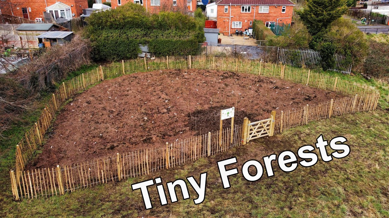 tiny forest animals write a review. Tiny Forests Nature In Urban Spaces Youtube