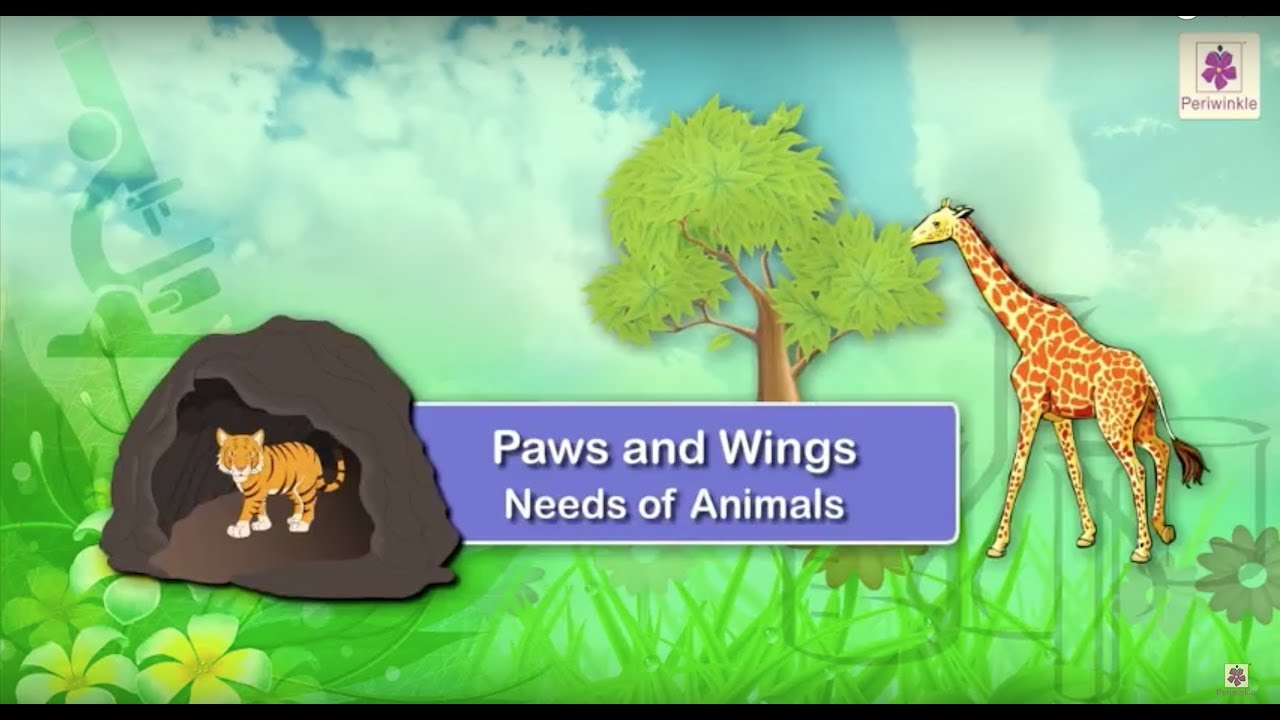 Needs Of Animals - Food and Shelter | Animal Homes | Science | Grade 1 | Periwinkle