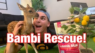 We Rescued a Baby Deer! | How To Bottle Feed A Baby Deer Fawn | Creature Feature: Axis Fawn