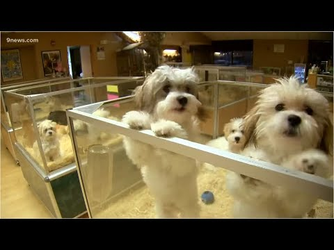 Bill Introduced In Colorado Looks To Crack Down On Puppy Mills