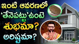 Honey Bee Nest In House Is Good or Bad?| honey bees in house vastu| Astro Syndicate