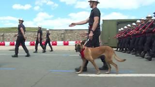 14 Juillet : Un sapeur-pompier de Paris défile avec son chien