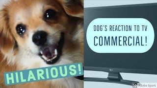 Dog's HILARIOUS REACTION to Lock Surgeon Commercial!