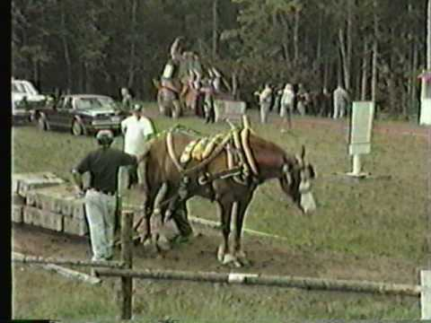 East Dalhousie Ox & Horse Pull 1999 Part 2 - Conquerall Mills Horse & Ox Pull Oct 2,1999