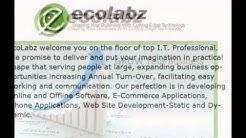 Affordable SEO Company SEO Service Destin Florida - Ecolabz