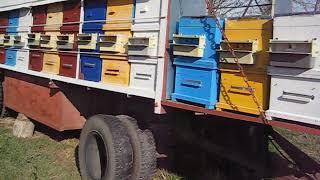 Уроки пчеловодства  для новичков. Февраль 2018