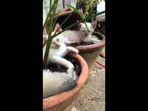 Gatos dormindo dentro do vaso