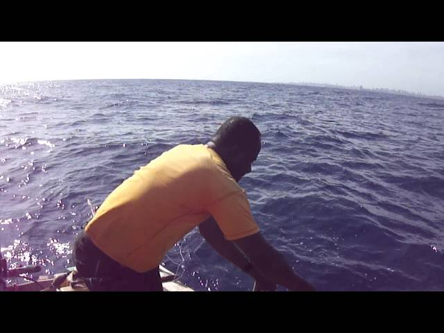pesca albacora 3 Travel Video