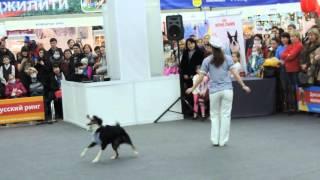 Выставка собак. Пермь 30.01.2016