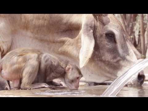 People For Animals Trust - Faridabad