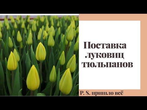 Вопрос: Куда уходят тюльпаны не распроданные к 8 марта?