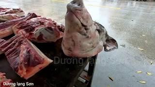 khủng đầu heo, lợn 3 tạ nuôi 3 năm Three-pound p๐rk raİsed thŗee yeąrs oĮd pİg pİg head