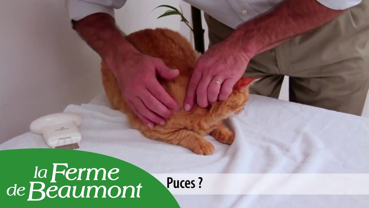 peigne anti puces chat et chien eyenimal electronic flea comb youtube. Black Bedroom Furniture Sets. Home Design Ideas