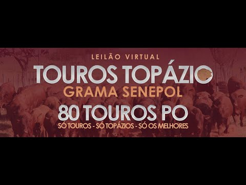 LOTE 29   ZT 3671