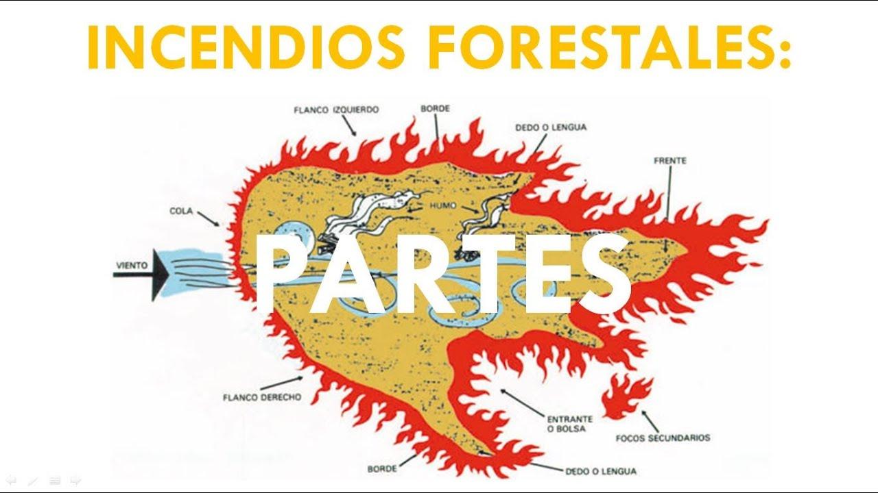 Incendios forestales partes youtube for Partes de un vivero forestal