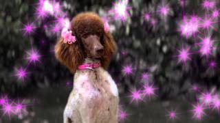 Clip - Stan Falls in Love - Dog With A Blog - Disney Channel Official