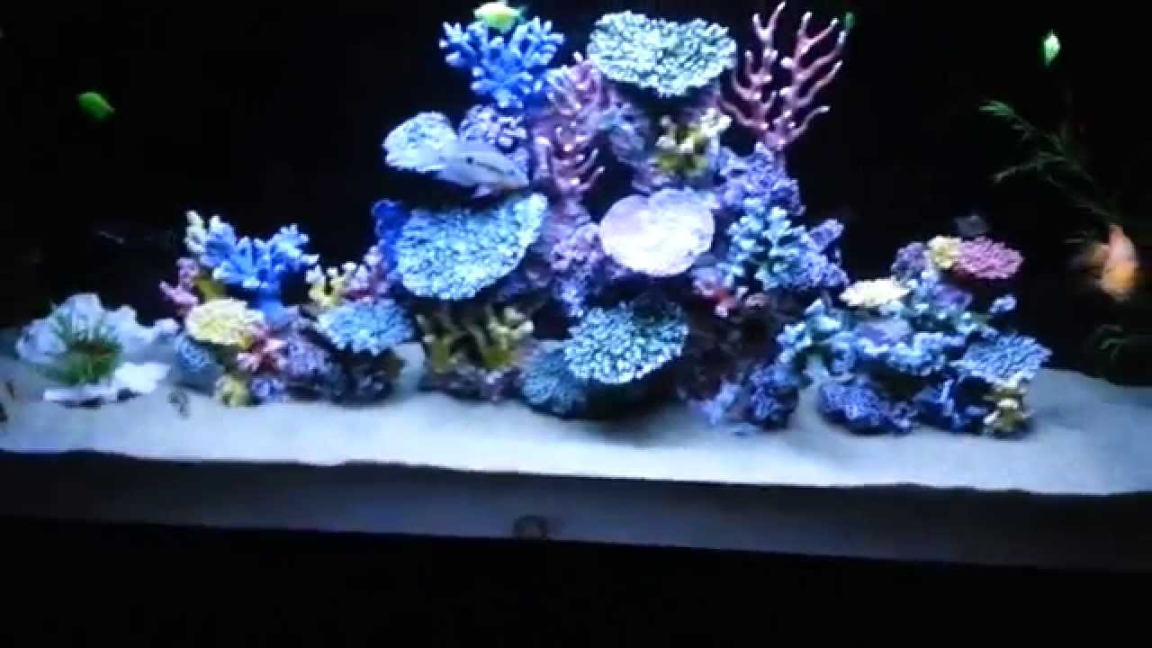 Freshwater fish aquarium with artificial coral reef tank for Aquarium decoration ideas freshwater