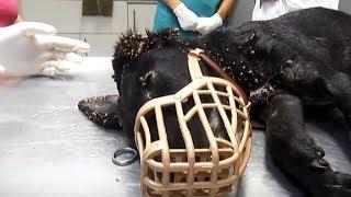 Alle hielten es für Ausschlag, doch bei näherem Hinsehen fiel der Tierarzt fast vom Hocker!