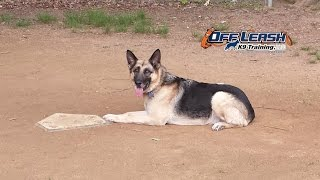 "4 Year Old German Shepherd ""max"" Before/after Video 