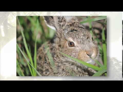 Rescue Profile 10 - Calgary Wildlife Rehabilitation Society