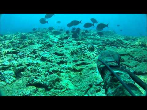 Spearfishing Hawaiian Style 1.01 (rockin The Stick!)