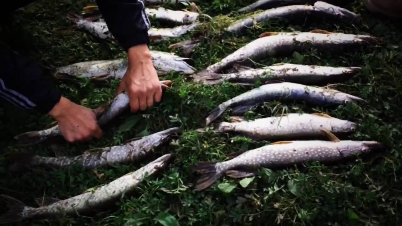 Рыбалка на Шешме, 27.09.2014