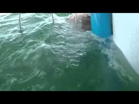 Best Shark Attack Video   gigantic Great White Shark in South Africa while Cage Diving