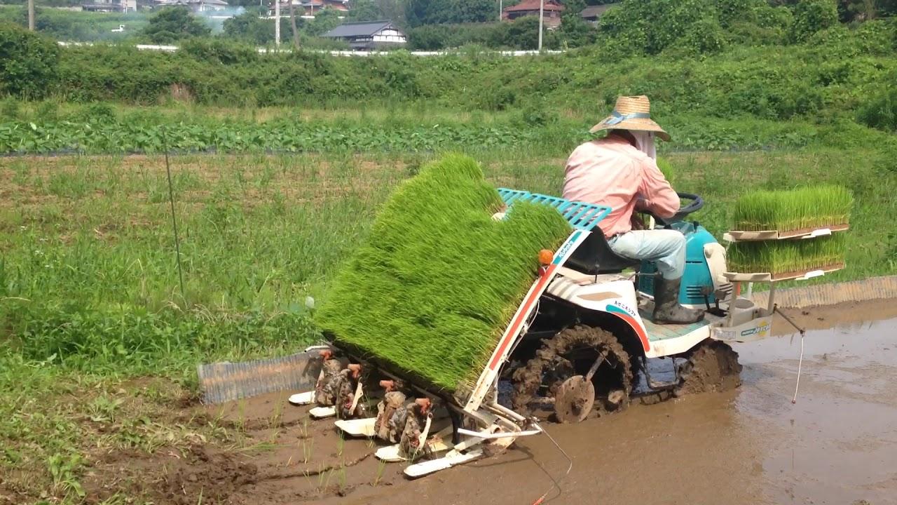 Teknologi Pertanian Jepang Youtube