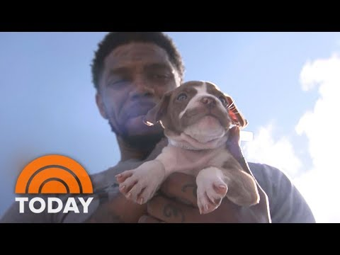 Miami Heat Players Are Helping To Find New Homes For Animals Displaced By Hurricane Irma | TODAY