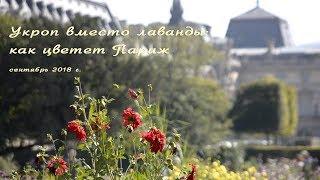 Что растет в парижских цветниках