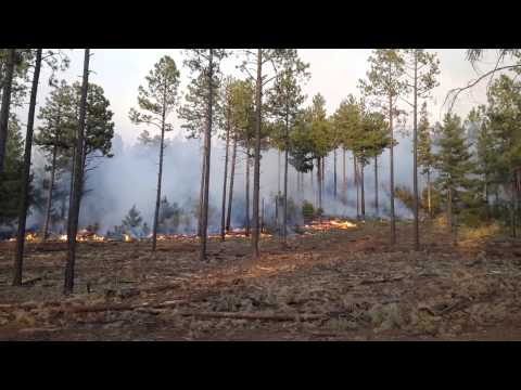 The 2014 San Juan Fire: Fuel Treatments and Fire Management